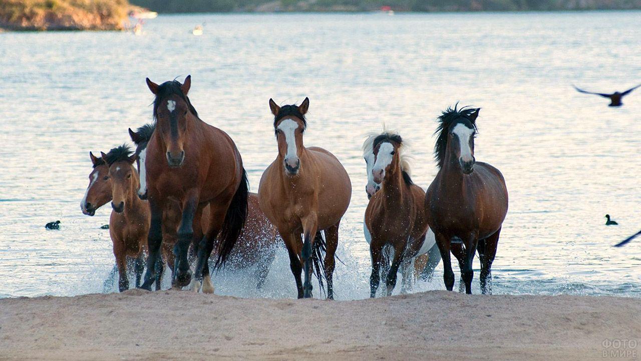 Табун лошадей скачет по прибрежному песку