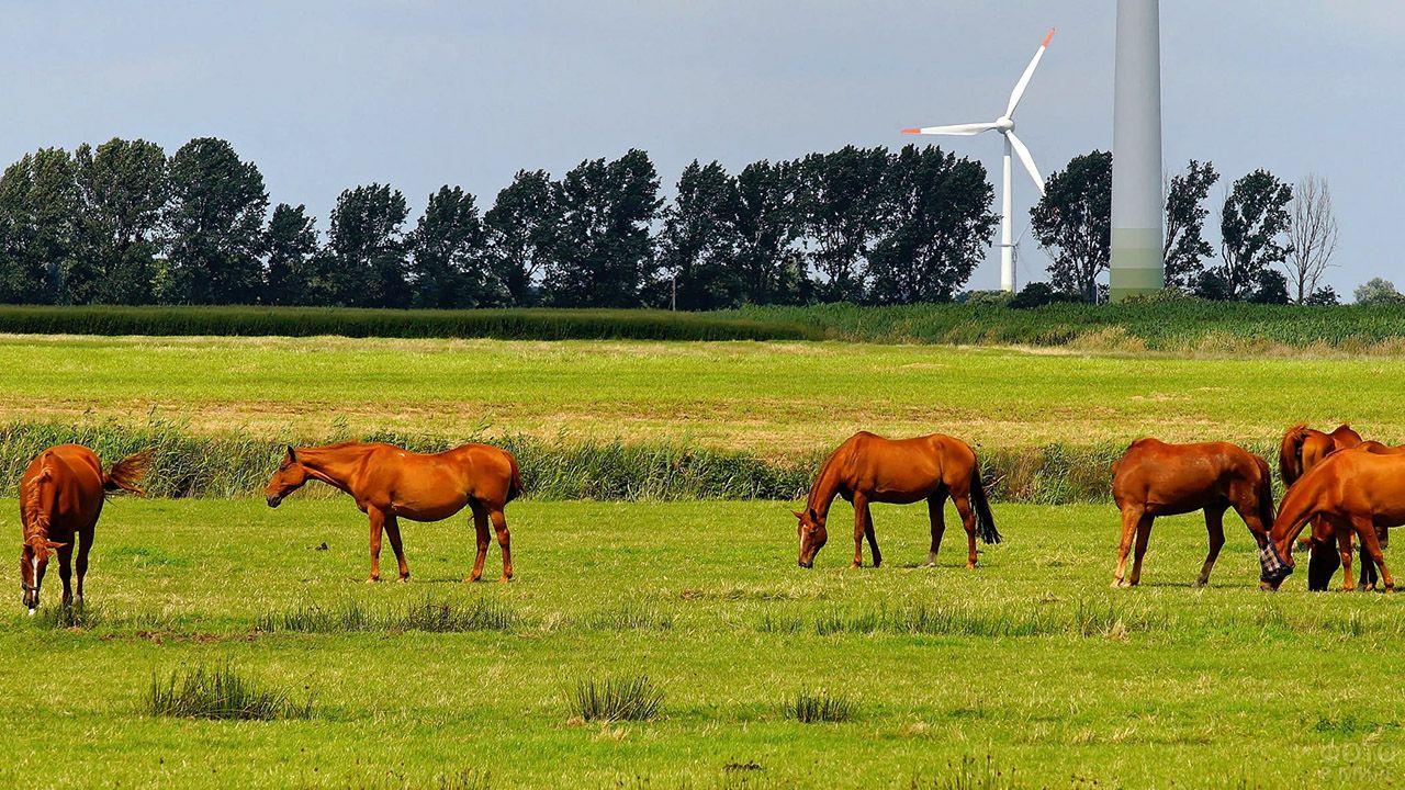 Табун рыжих лошадей на зелёном лугу