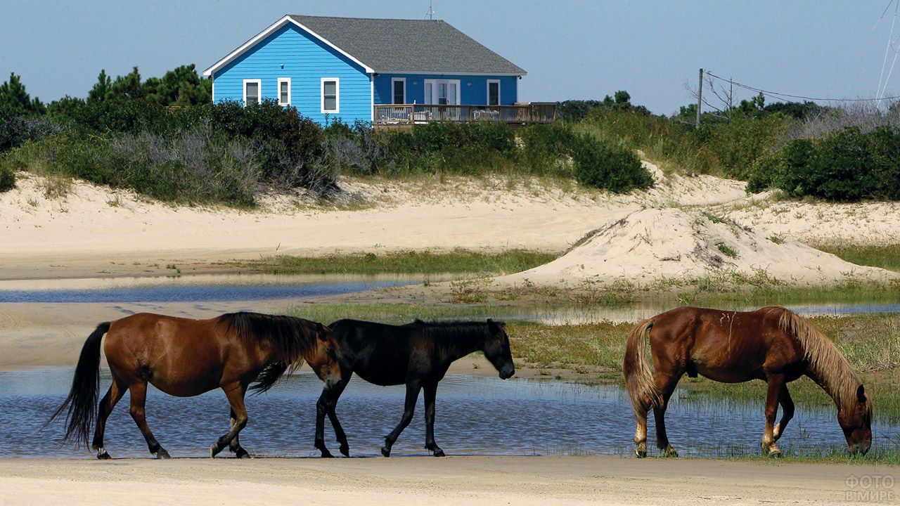Три лошади у сельской речушки