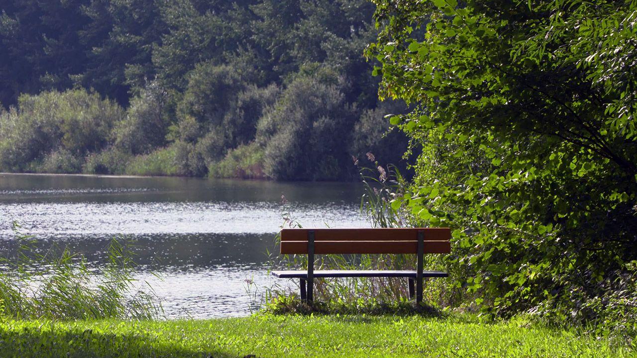 Парковая скамейка у дикого пруда