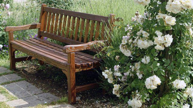 Садовая скамейка у куста белого шиповника