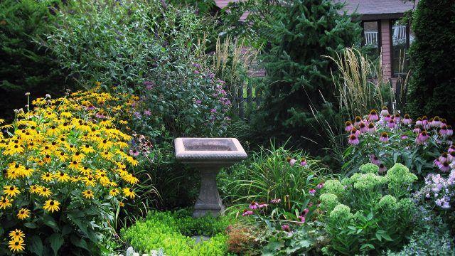 Цветущая эхинацея и квадратная каменная чаша в зелёном саду