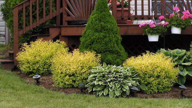 Деревянная веранда с зелёной клумбой из многолетних кустарников