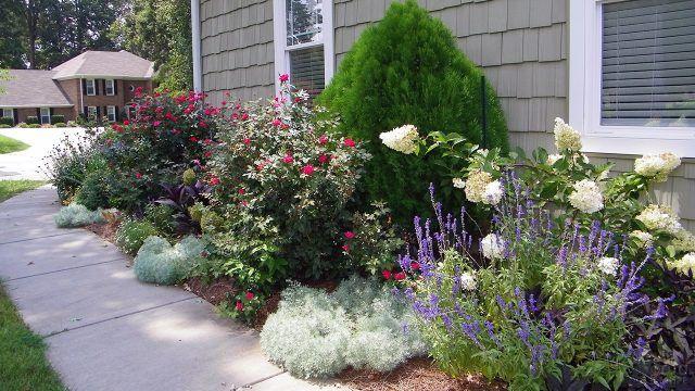 Гортензии и розы на клумбе вдоль стены дома