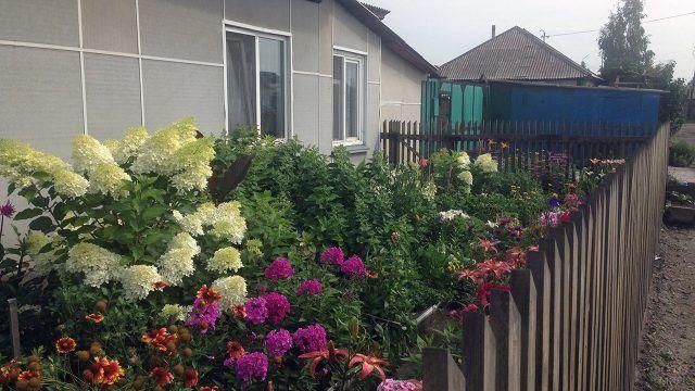 Гортензии под окнами садового домика