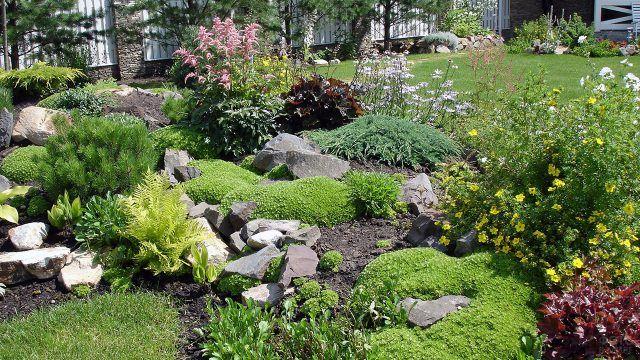 Клумба-рокарий с многолетними кустарниками и полевыми цветами
