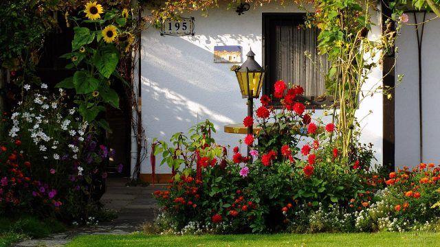 Клумба с красными георгинами перед белым домиком
