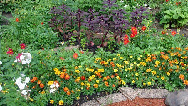 Клумба с жёлто-оранжевыми бархатцами и красными ромашками