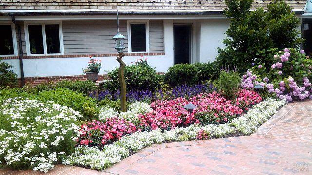 Контрастная клумба вдоль садовой дорожки у фасада дома