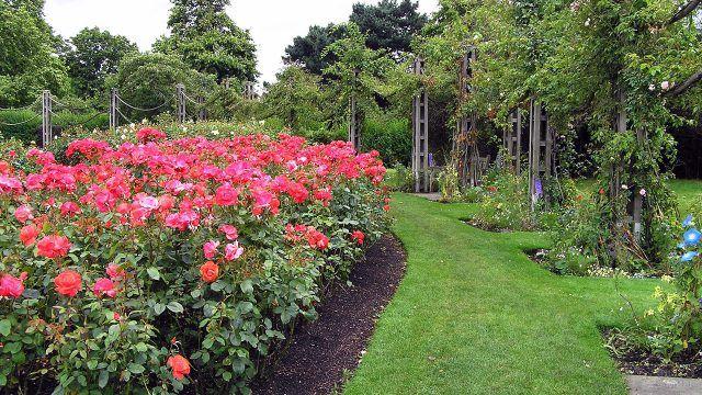 Красные розы посреди стильного зелёного газона с декорированными деревьями