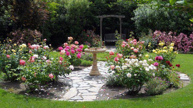 Розарий с каменной декоративной чашей в изящном саду