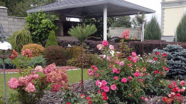 Розовые гортензии и кустовые розы на клумбе перед домом