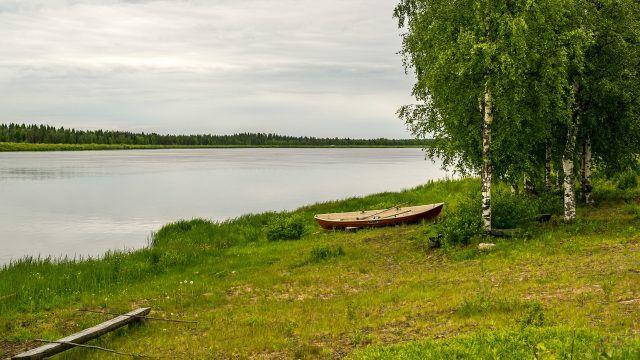 Березы и лодка на берегу реки