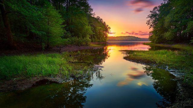 Болотистые берега таёжной реки