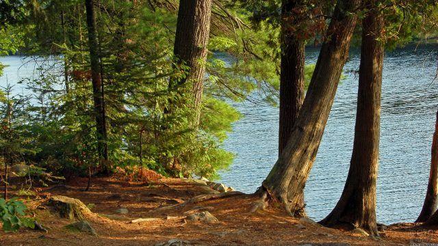 Большие деревья у реки