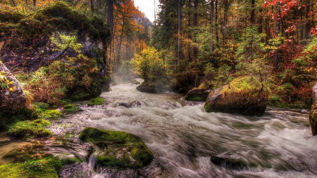 Быстрая лесная река