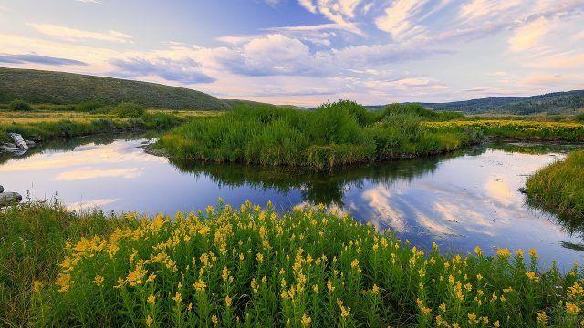 Цветущий берег реки