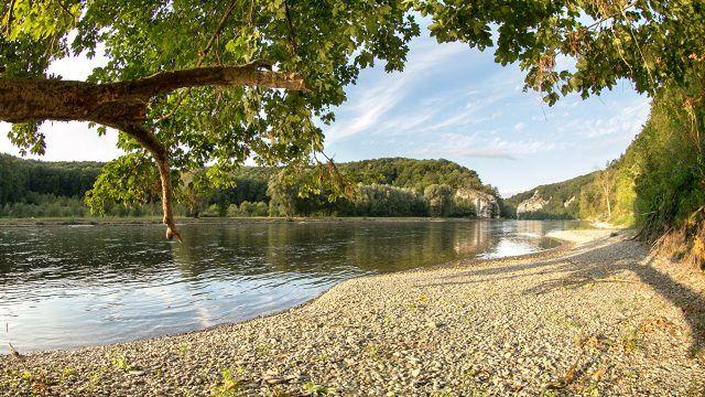 Дерево склонироль над галечным берегом реки
