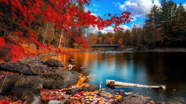 Фото реки и осеннего леса