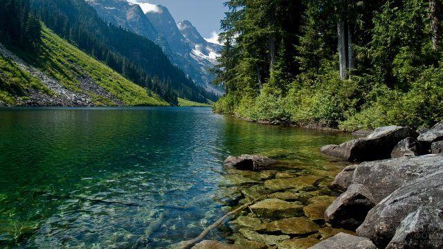Лес на берегу горной реки