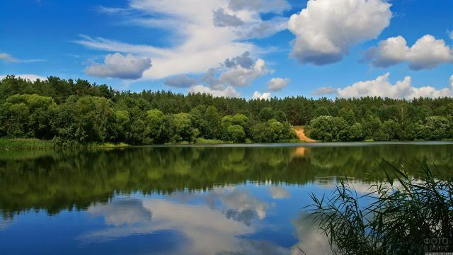 Лес на противоположном речном берегу