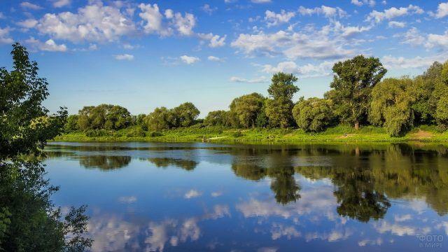 Река и лес летом