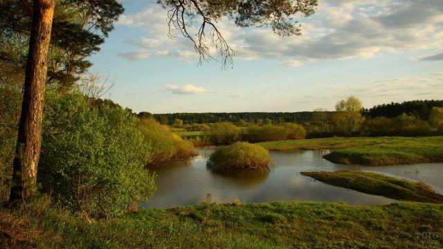 Сосна на берегу реки и островок в воде