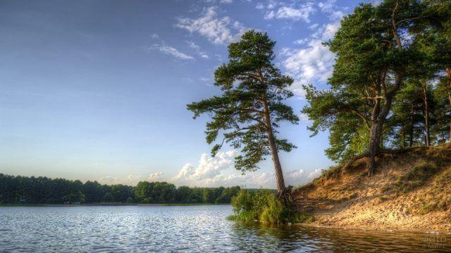 Сосна склоняется над рекой