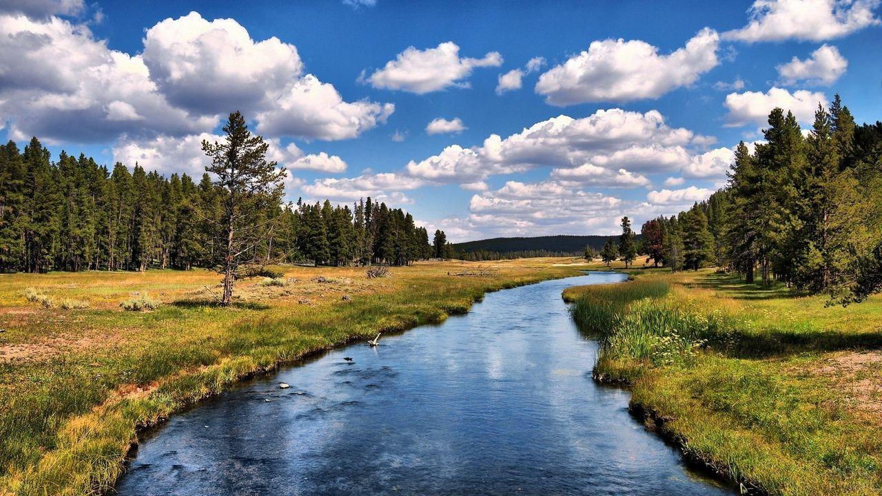 Сосны растут по берегам реки