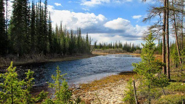 Таёжная река и мелколесье