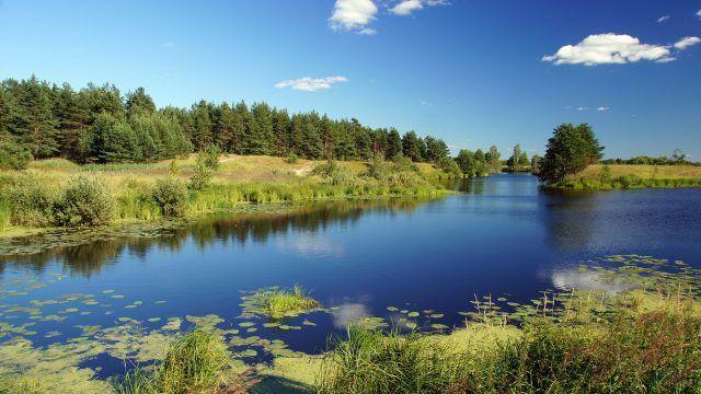 Заболоченный берег реки