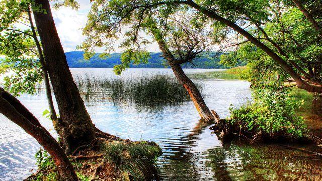 Затопленые деревья у реки