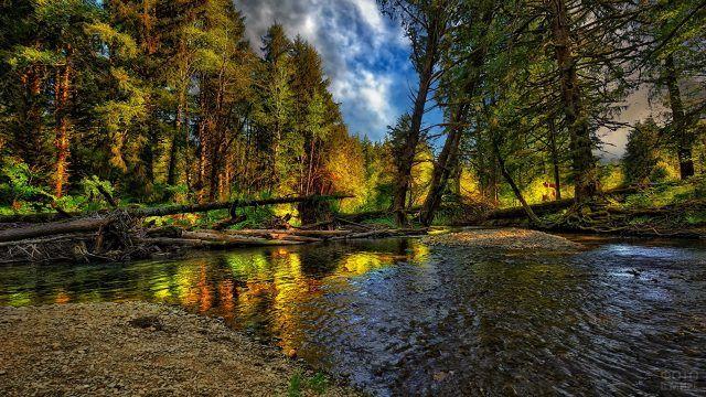 Завалы на лесной реке