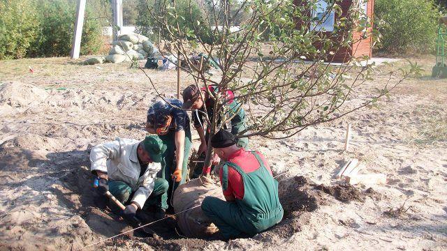 Четверо мужчин высаживают плодовый крупномер