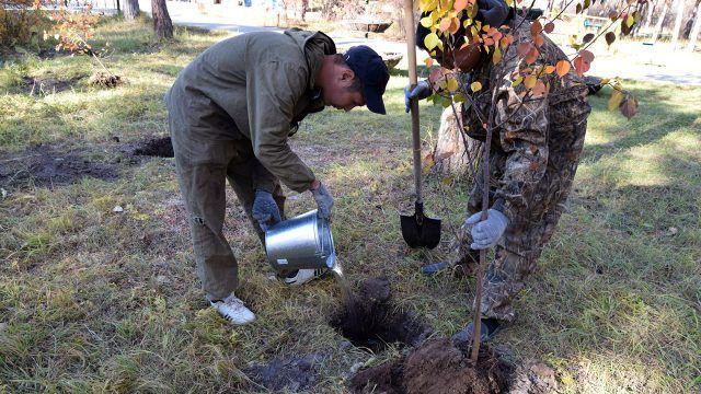 Двое мужчин высаживают дерево в осеннем парке