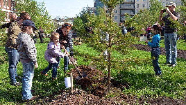 Молодые родители с детьми высаживают ели во дворе многоквартирного дома