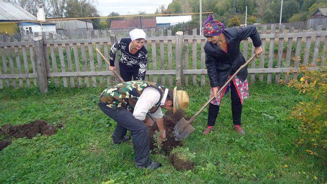 Пенсионеры сажают плодовое дерево на осеннем садовом участке