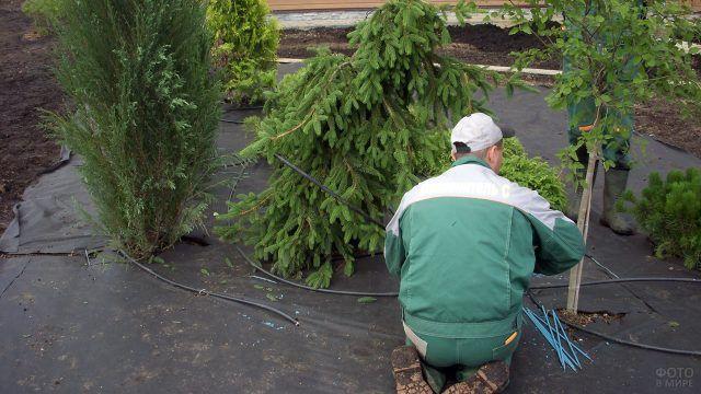 Профессионалы в процессе озеленения загородного участка