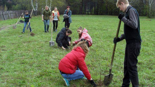 Школьники-волонтёры высаживают саженцы деревьев