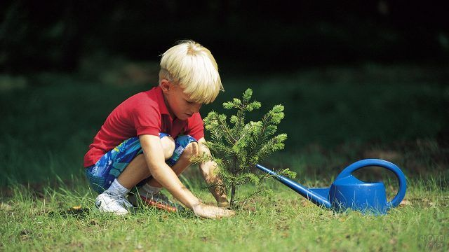 Светловолосый мальчик сажает маленькую ель