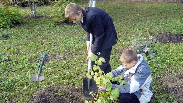 Ученики сажают куст на территории школы