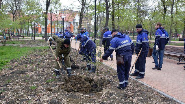 Волонтёры Газпрома и сотрудники фонда Вернадского высаживают аллею в городе Минеральные Воды