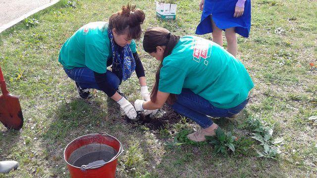 Волонтёры сажают деревце в ходе Эстафеты добрых дел