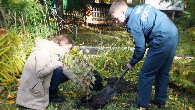 Волонтёры высаживают декоративный кустарник