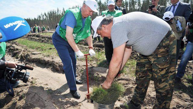 Всероссийский день посадки леса в Волжской коммуне