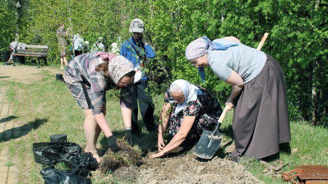 Высадка деревьев в сквере Победы в ХМАО