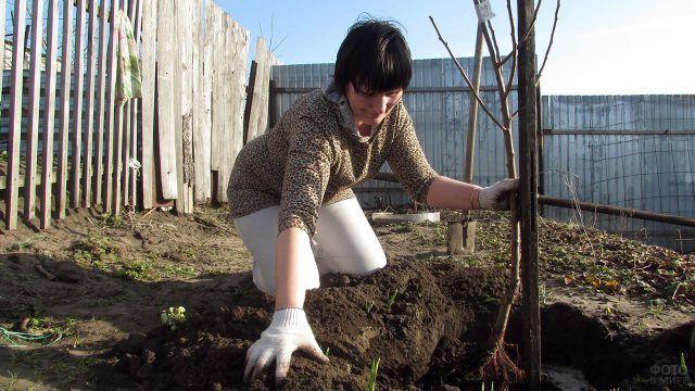 Женщина высаживает саженец абрикоса