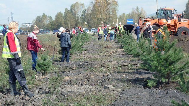 Жители Кузбасса высаживают хвойные деревья вдоль трассы