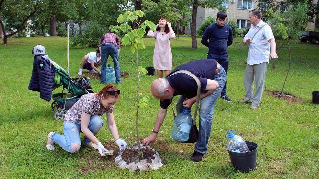 Жители Пскова высаживают деревья во дворе многоквартирного дома