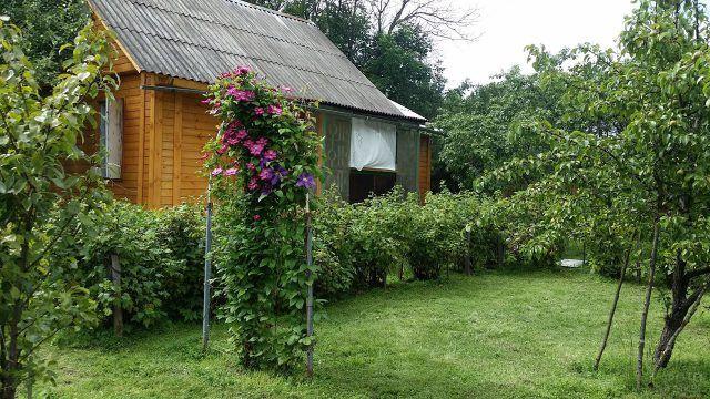 Деревянная дача с зелёным палисадником